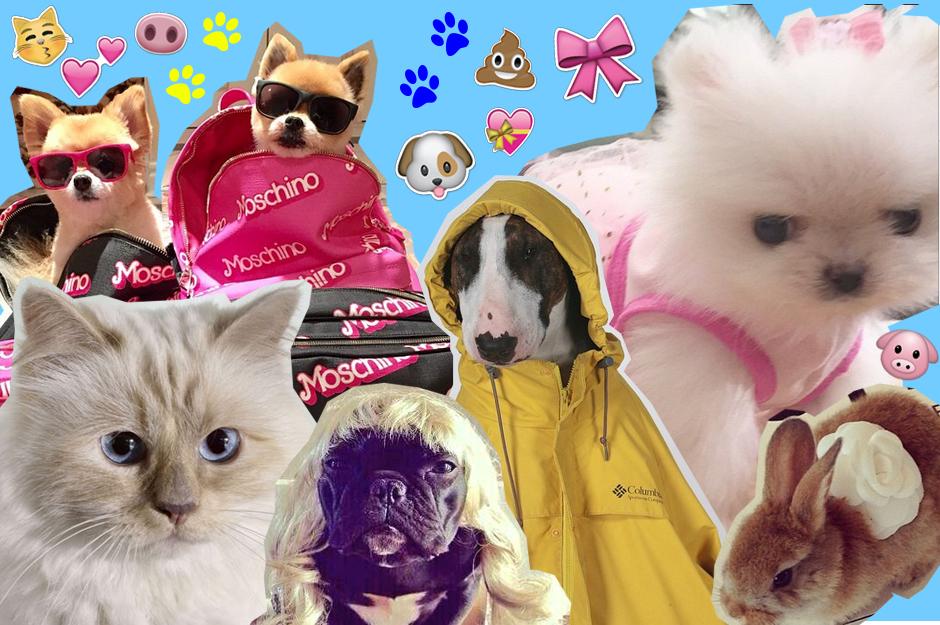 celebrities pets