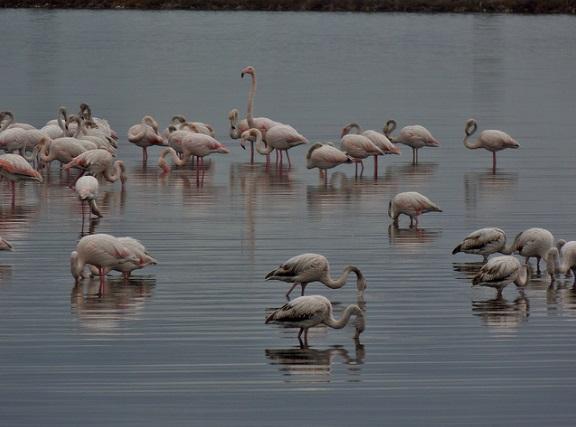 Korba Lagoon, Tunisia  (Flickr Saffy H)