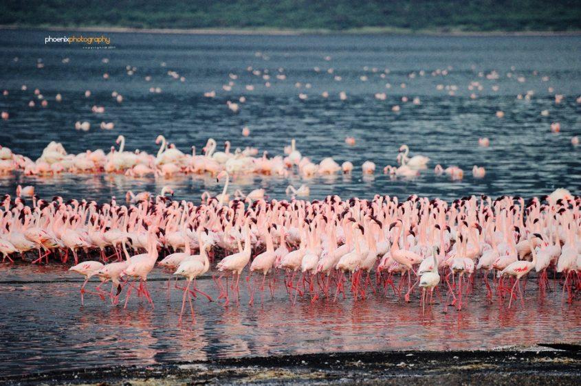 Lake Bogoria, Kenya  (Flickr Phoneix Wang)