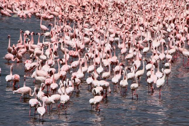 Lake Bogoria, Kenya  (Flickr Lauren)
